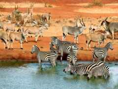 animal, саванна, watering