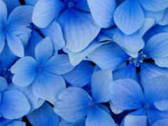 цветы, blue, title
