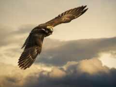 орлан, небо, funart