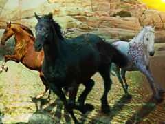kin, лошади, лошадь