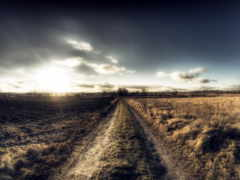 дорога, поле, утро