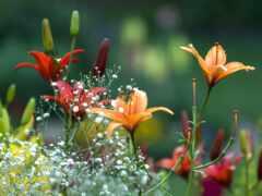 цветы, summer, красивый