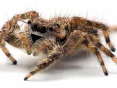 паук, заставки, ужасный