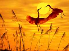 птица, закат, картинка