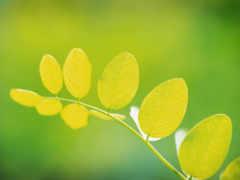 зелёный, листва, макро