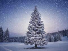winter, лес, fir