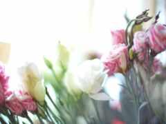 эустома, colorful, цветы