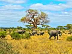 саванна, африка