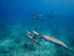 getty, дельфин, hawaii