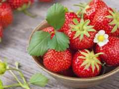 клубника, meal, ягода