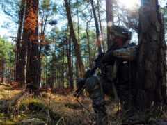 солдат, hide, дерево