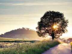 сниматься, дерево, landscape