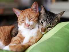 коты, спят, red