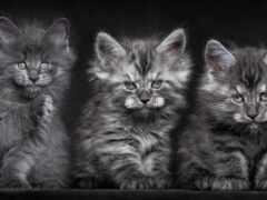 коты, ли, bottomless