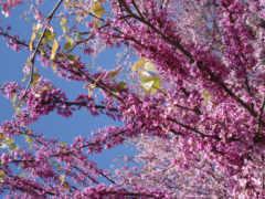 весна Фон № 27623 разрешение 2560x1600