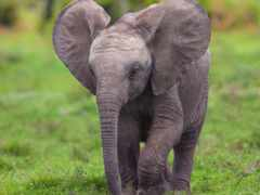 zoo, николаевский, слон