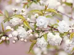 весна, год, cvety