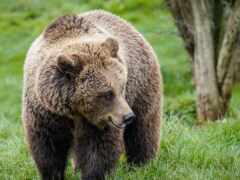 медведь, ipad, браун
