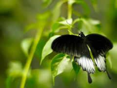 case, мини, бабочки