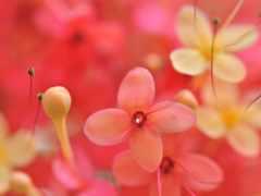 mac, smartphones, цветы