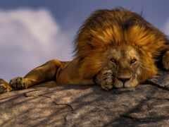 lion, pinterest, идея