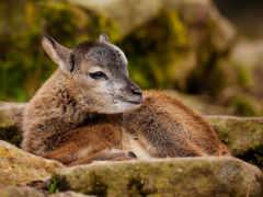 deer, животные