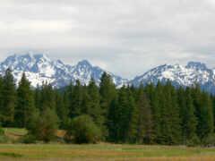 гора, pine, природа