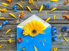 gerbera, цветы, креатив