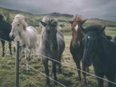 лошадь, caballo, höst