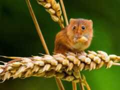 mouse, narrow, хороший