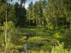german, лес, бавария