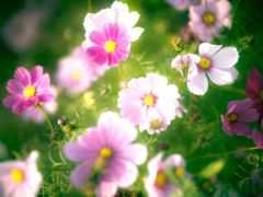 саду, натуральная, взгляд