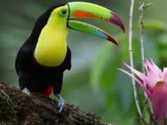 toucan, ecran, fond