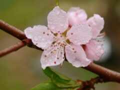 drop, роса, цветы
