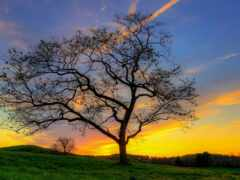 дерево, закат, nice