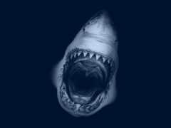 акула, great, white
