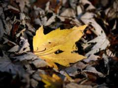 осень, листва, осенние