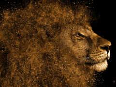 lion, hintergrundbild, tiere