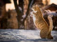 кот, задних, лапах