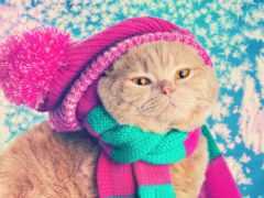 кот, шапка, шапке