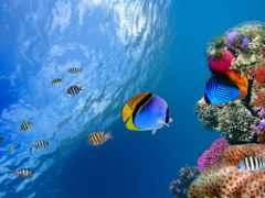 рыбки, world, underwater