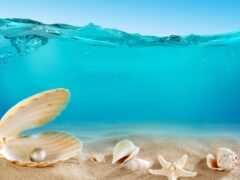 seashell, море, shell