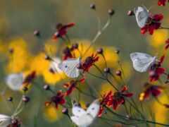 насекомое, природа, заставка