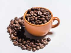 foto, seed, coffee