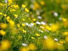 поляна, весенняя, теги