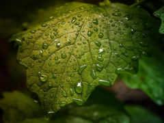 water, drop, leaf