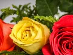роза, cool, high