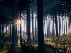 natural, landscape, tempo
