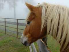 caballo, грива, cavallo