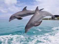 дельфины, дельфин, сне